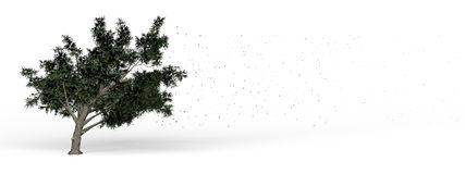 Meandruje drzewa Fotografia Stock