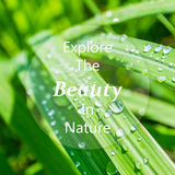 Meaningful quote on blurred lemongrass background Stock Photography