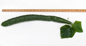 Measured English Cucumber royalty free stock photography