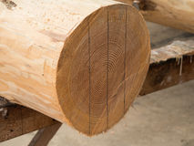 Measured wood logs with lines. Wood logs with drawn lines Stock Images
