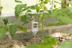 Measurement and control of temperature in the greenhouse. In natural light royalty free stock image