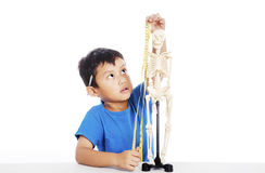 Measurement of human skeleton. Portrait of little elementary school student measures human skeleton by measurement tape Royalty Free Stock Photo