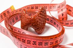 Measurement of thyroid as definition of symptom or sign of disease, e.g. enlarged thyroid. Thyroid model wrapped by measuring tape. Visualization symptom of stock image