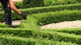 Measuring the height of a boxwood garden. At Frederiksborg Palace, Denmark stock video footage