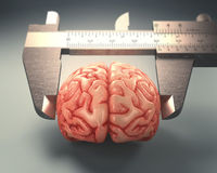 Measuring The Human Intelligence Stock Photo