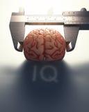 Measuring The Human Intelligence Stock Photos