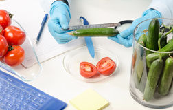 Measuring the lenght of cucumber Stock Images