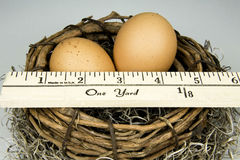Measuring Nest Egg Stock Image