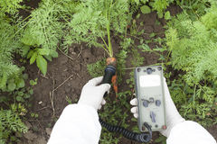 Measuring radiation levels of carrot. Measuring radiation levels of vegetable Stock Photos
