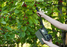 Measuring radiation levels of cherry tree Royalty Free Stock Photography