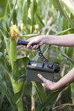 Measuring radiation levels of corn Stock Photo