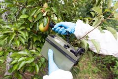 Measuring radiation levels of the fruit Royalty Free Stock Photos