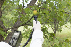 Measuring radiation levels of fruits Royalty Free Stock Photos