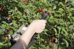 Measuring radiation levels of fruits Stock Image