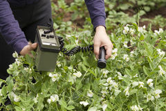 Measuring radiation levels of green peas Stock Photography