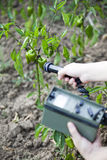 Measuring radiation levels of green peppers. Measuring radiation levels of vegetable Stock Photos
