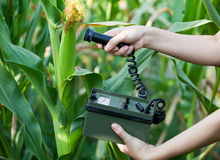 Measuring radiation levels of maize. Measuring radioactivity levels of corn Royalty Free Stock Photography