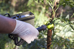 Measuring radiation levels of tomato. Measuring radiation levels of vegetable Stock Images