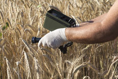 Measuring radiation levels of wheat. Measuring radioactivity levels of wheat Royalty Free Stock Photography