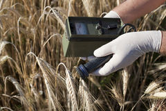 Measuring radiation levels of wheat. Measuring radioactivity levels of wheat Royalty Free Stock Photos