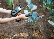 Measuring radiation levels of wild cabbage. Measuring radiation levels of vegetables Royalty Free Stock Images