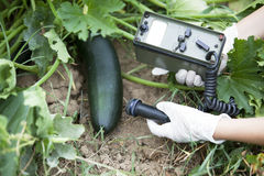 Measuring radiation levels of zucchini Stock Photos