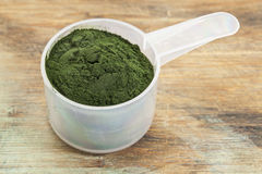 Hawaiian spirulina powder Stock Image