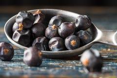Juniper Berries. A measuring spoon of juniper berries royalty free stock photo