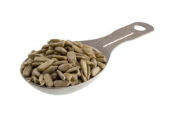 Measuring tablespoon of sunflower seeds Stock Images