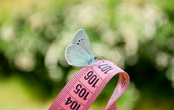 Measuring tape of pink color, on it sits a blue butterfly, close view on a blurred background Royalty Free Stock Photography