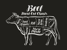 Meat cut charts. Cow, beef concept. Menu restaurant or butcher shop. Vector illustration stock illustration