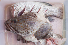 Meat of freshness grouper fish in sea food market preparing to c Royalty Free Stock Images