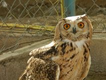 beautiful owl in the zoo garden stock images