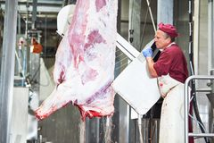 Meat manufacturing factory. butcher cutting beef carcass Stock Photography