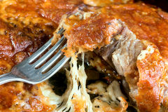Meat pork baked with cheese Royalty Free Stock Image