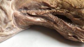 meat rå meat Rå nötköttbiff på en skärbräda Fotografering för Bildbyråer