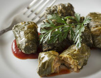 Meat rolls in cabbage leaves. Decorated with carrot leaves on white plate with fork; close-up Stock Photo
