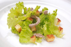 Meat Salad. Salad with Meat and Green Leaves and bread cubes Stock Images