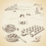 Meat sketch. Vector set of vintage sketches. Grazing cows and meat Stock Photos