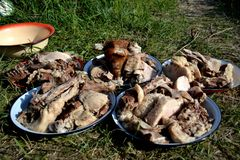Meat is a traditional kyrgyz meal. Boiled meat is a traditional kyrgyz meal Royalty Free Stock Photos