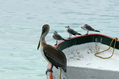Meating on the boat - Mexico Royalty Free Stock Photo