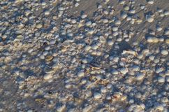 Meating of the shells on the beach. The gathered shells on the beach await the surf in an afternoon. Some of them will dance next to the waves Royalty Free Stock Photography