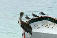 Meating sulla barca - Messico Fotografia Stock Libera da Diritti