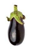 meaty aubergine Arkivfoton