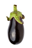 Meaty eggplant Stock Photos