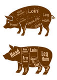 Meaty pigs with butchery cuts Royalty Free Stock Photo