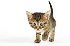 Free Meaw Meaw Royalty Free Stock Photos - 11776778