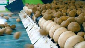 Mecanismo de la fábrica que vuelve a poner los tubérculos de la patata almacen de metraje de vídeo