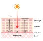 Mecanismo de la piel de manchas Imagen de archivo