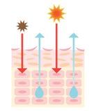 Mecanismo de la piel seca Imagen de archivo libre de regalías